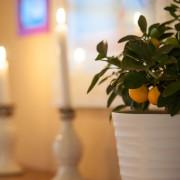Zitronenbaum und Kerzen als Tischdekoration